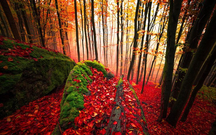 trees, forest, leaves, trunks, autumn, moss