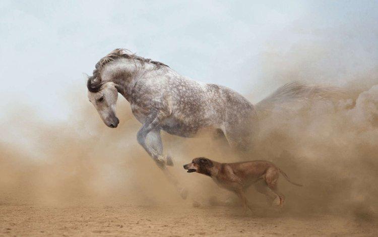 horse, dog, dust, running