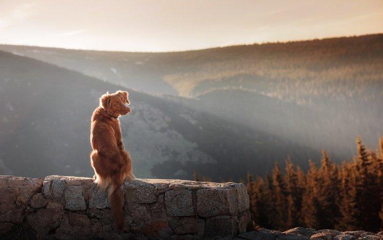 морда, собака, холмы, уши, природа, хвост, камни, польша, пейзаж, anna averyanov, karkonosze national park, животные, закат солнца, стена, face, dog, hills, ears, nature, tail, stones, poland, landscape, animals, sunset, wall