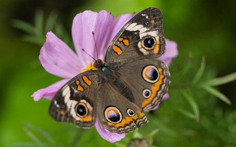 цветы, насекомое, бабочка, крылья, flowers, insect, butterfly, wings
