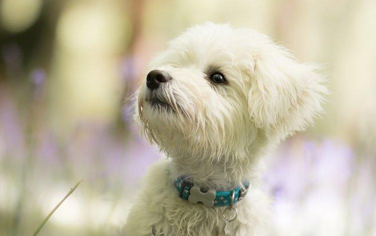 nature, background, muzzle, look, dog, puppy, lapdog