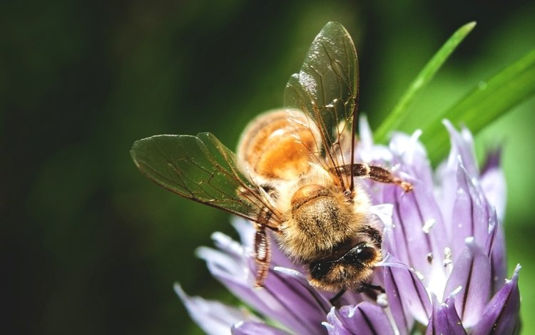 macro, insect, flower, bee, pollination