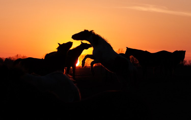 sunset, horse, horses, the herd
