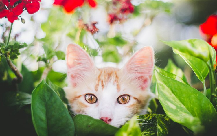 eyes, flowers, leaves, background, mustache, cat, look, kitty