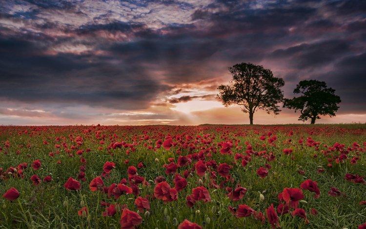 the sky, trees, sunset, landscape, field, maki