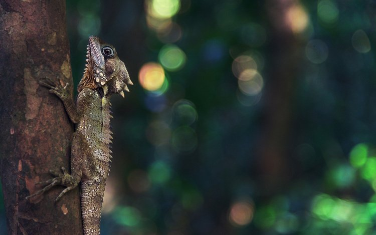 tree, lizard, reptile, bokeh