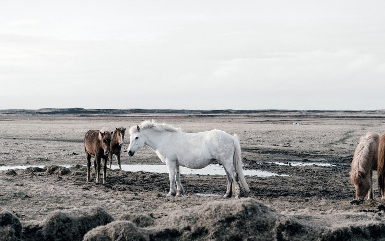 nature, horse, horses, the herd