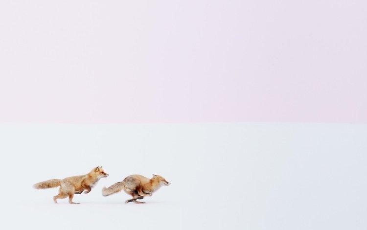 snow, nature, winter, fox, running