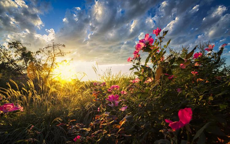 the sky, light, grass, clouds, sunrise, the sun, nature, background, morning, wildflowers