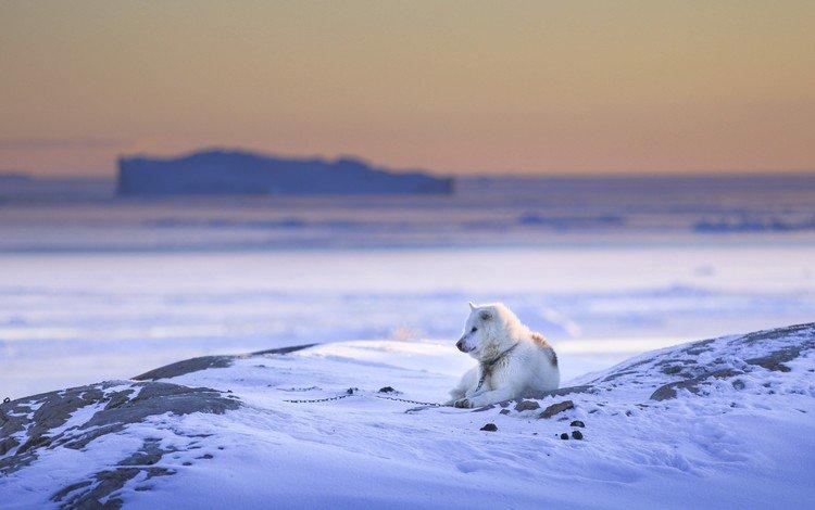snow, nature, winter, dog
