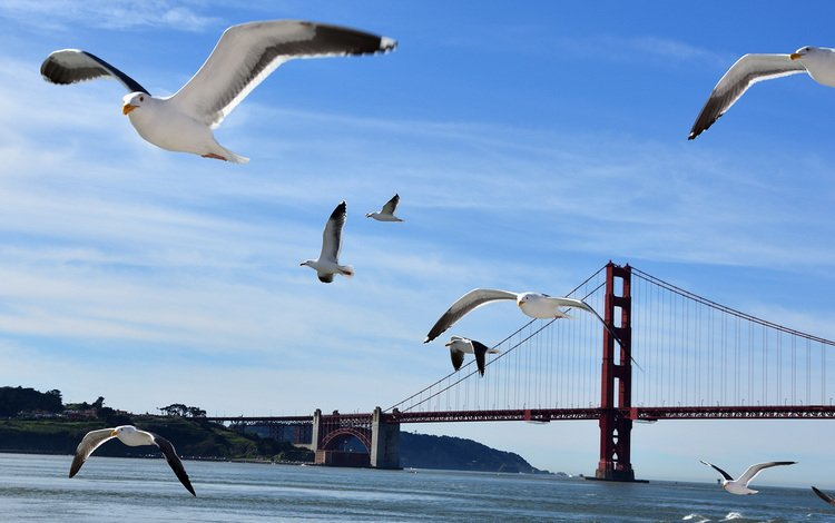 the sky, water, flight, bridge, wings, birds, seagulls