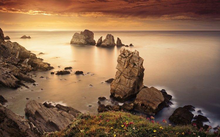 flowers, rocks, stones, shore, sea, horizon