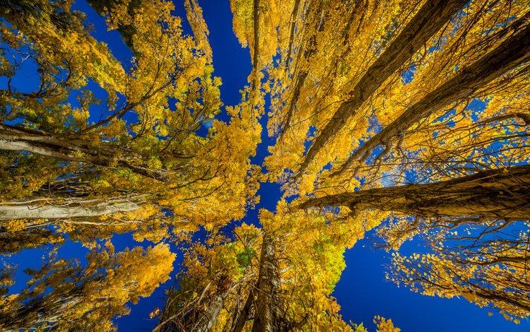 the sky, trees, leaves, autumn, new zealand, travis daldy, poplar