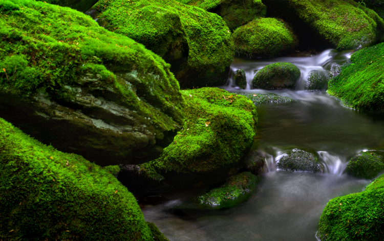 water, nature, stones, stream, waterfall, moss, for, connecticut, cassie guilani