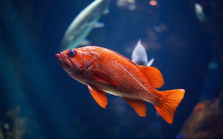 water, fish, swimming, underwater world, closeup