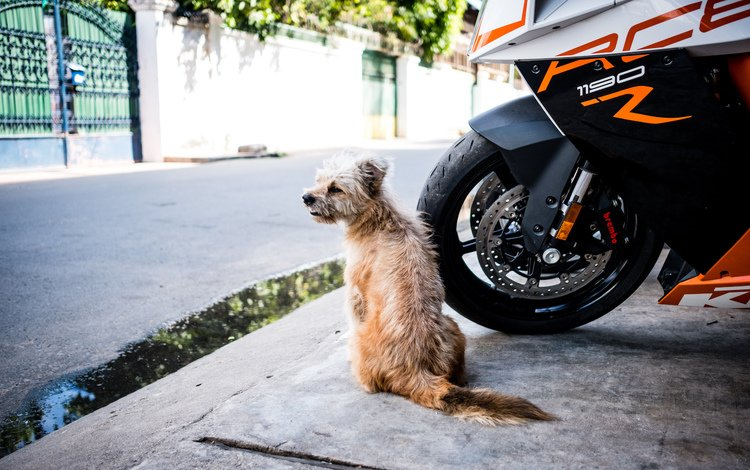 the city, dog, street, motorcycle