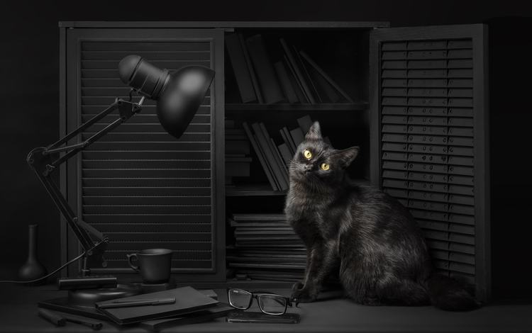 eyes, light, background, cat, look, glasses, lamp, black, library, reading, sanket khuntale