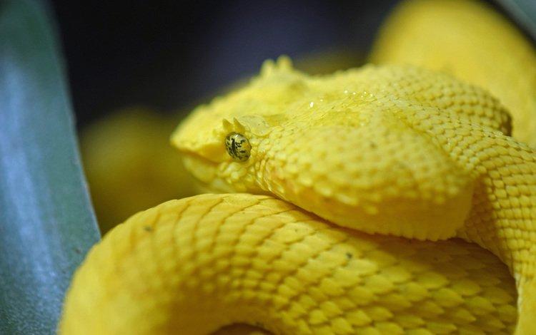 snake, reptile, reptiles