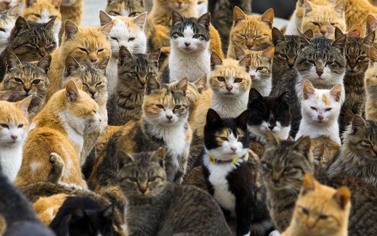 глаза, усы, ушки, коты, кошки, котята, мордочки, eyes, mustache, ears, cats, kittens, faces