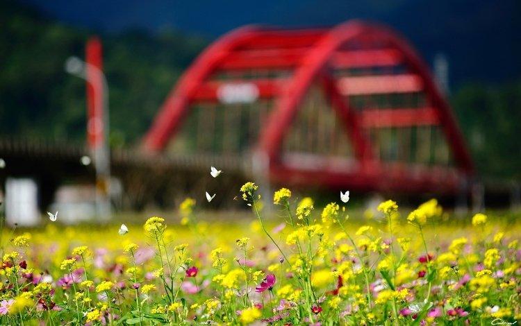 цветы, природа, лето, насекомые, бабочки, боке, желтые цветы, flowers, nature, summer, insects, butterfly, bokeh, yellow flowers