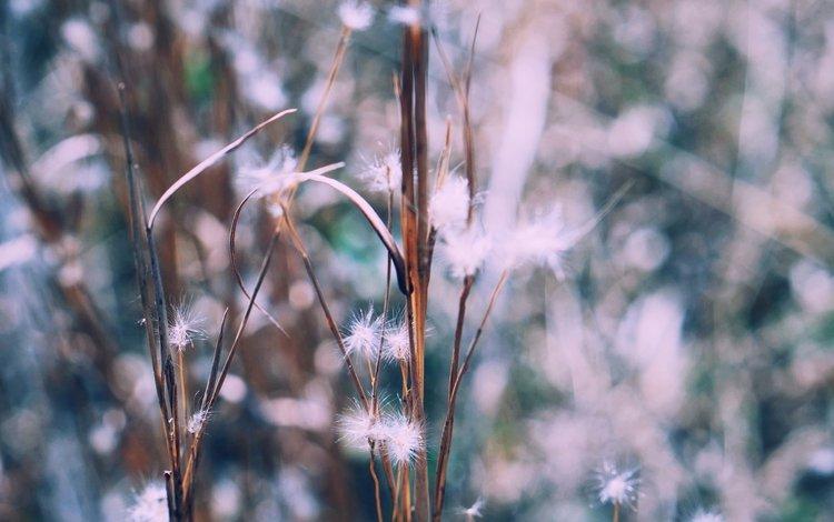 растения, размытость, стебли, пух, пушинки, былинки, plants, blur, stems, fluff, fuzzes, blade