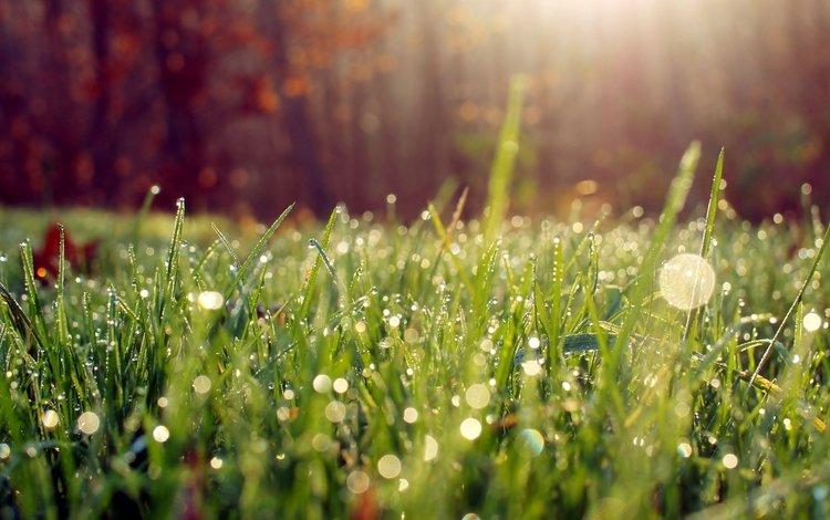 трава, роса, капли, grass, rosa, drops