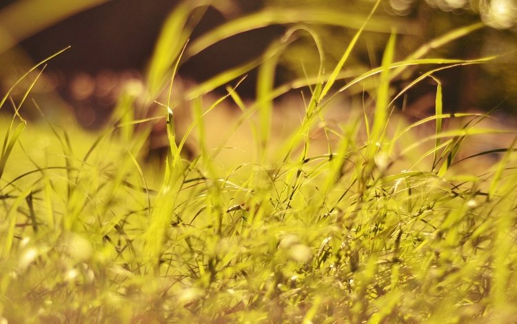 трава, растения, макро, grass, plants, macro