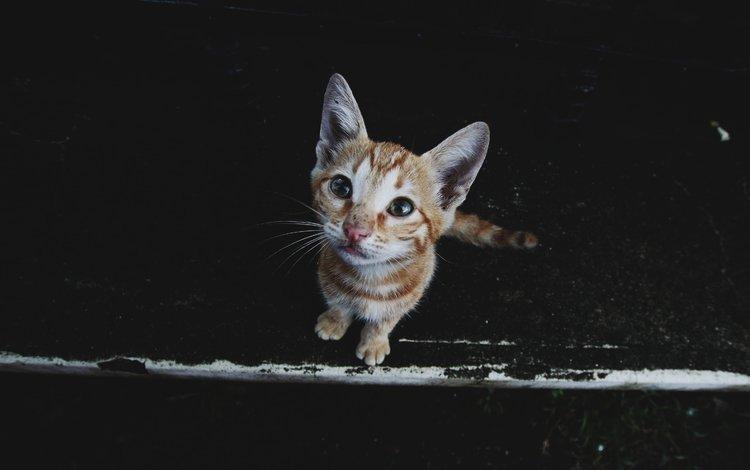 кот, мордочка, усы, кошка, взгляд, котенок, черный фон, cat, muzzle, mustache, look, kitty, black background