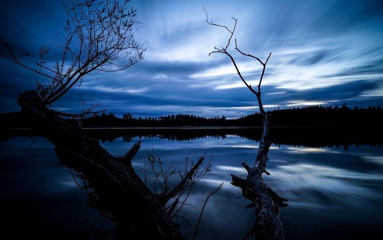 ночь, деревья, озеро, отражение, night, trees, lake, reflection