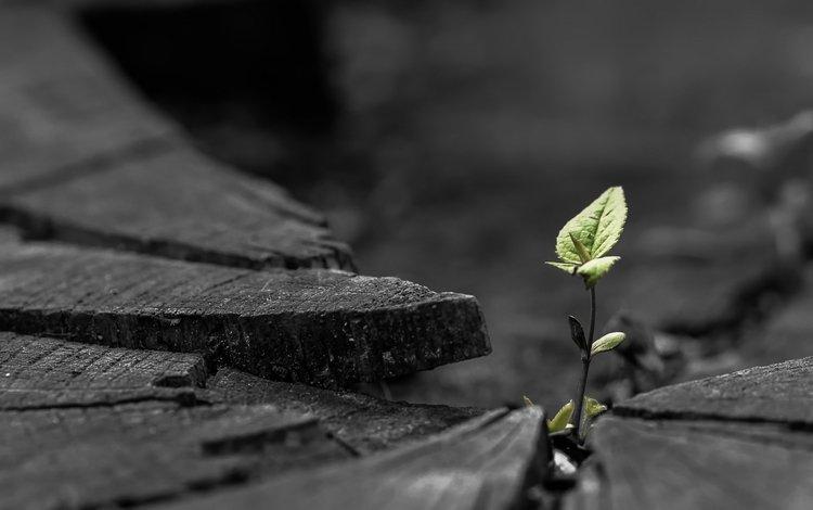 природа, листья, макро, растение, росток, пень, nature, leaves, macro, plant, rostock, stump