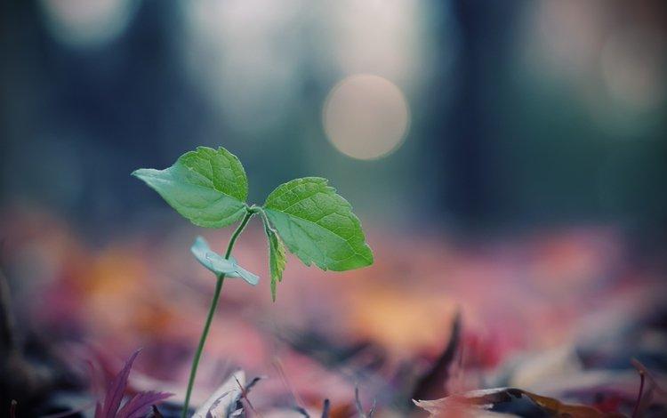 листья, макро, размытость, росток, боке, leaves, macro, blur, rostock, bokeh