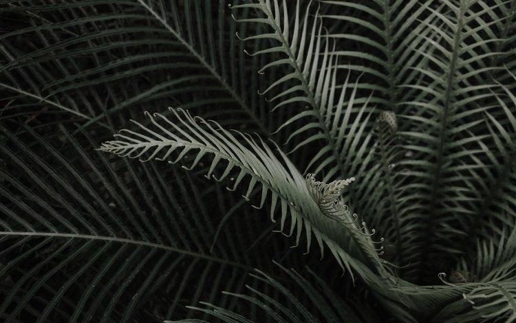 листья, ветки, растение, папоротник, leaves, branches, plant, fern