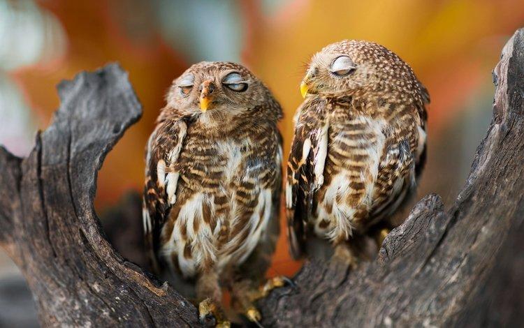 tree, sleep, birds, beak, feathers, owls