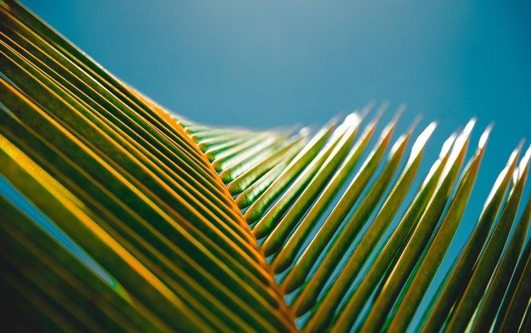 небо, природа, макро, лист, пальма, крупный план, the sky, nature, macro, sheet, palma, close-up
