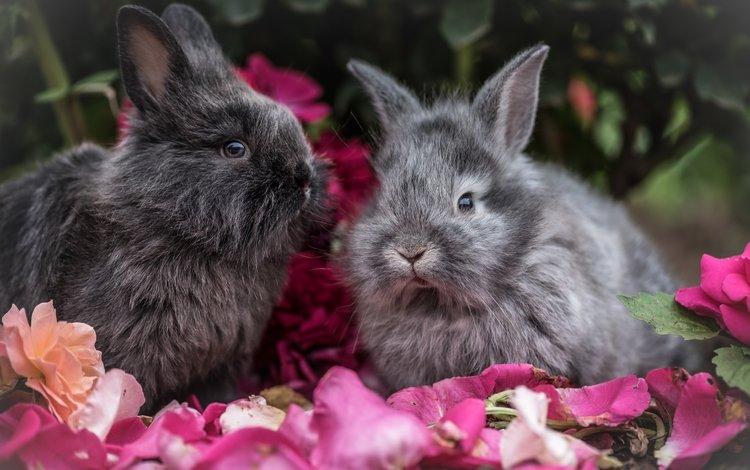 цветы, взгляд, пушистые, ушки, кролик, кролики, flowers, look, fluffy, ears, rabbit, rabbits