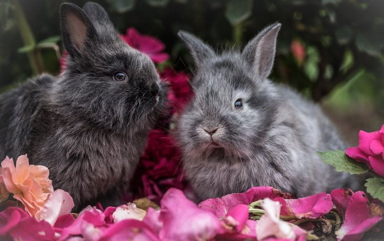 flowers, look, fluffy, ears, rabbit, rabbits