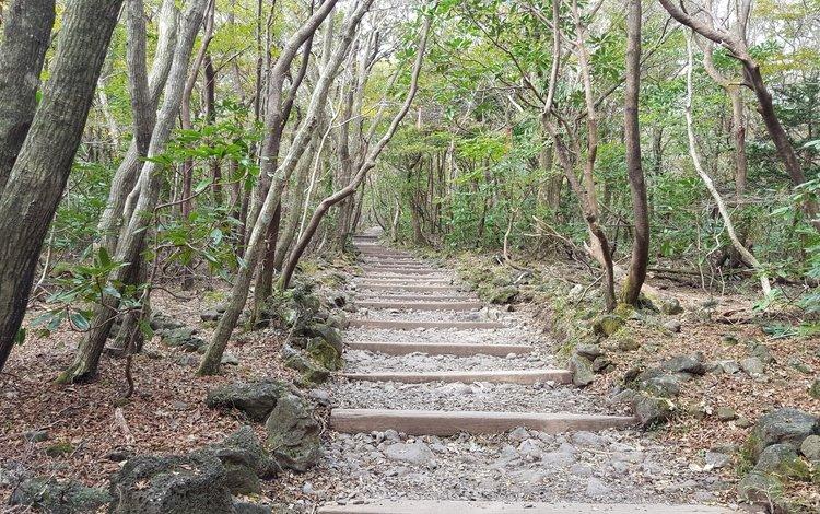 деревья, камни, лестница, ступеньки, южная корея, остров чеджудо, trees, stones, ladder, steps, south korea, jeju island