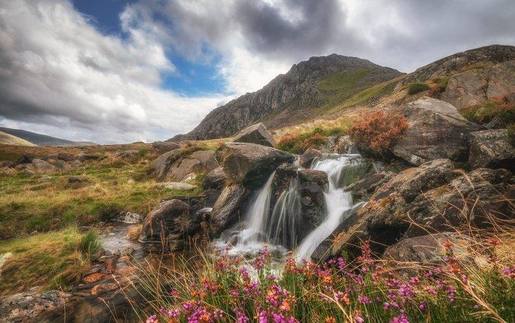 цветы, ручей, река, водопад, горы, водопады, скалы, уэльс, природа, камни, лес, пейзаж, flowers, stream, river, waterfall, mountains, waterfalls, rocks, wales, nature, stones, forest, landscape