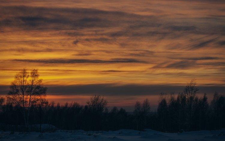 деревья, снег, закат, зима, trees, snow, sunset, winter