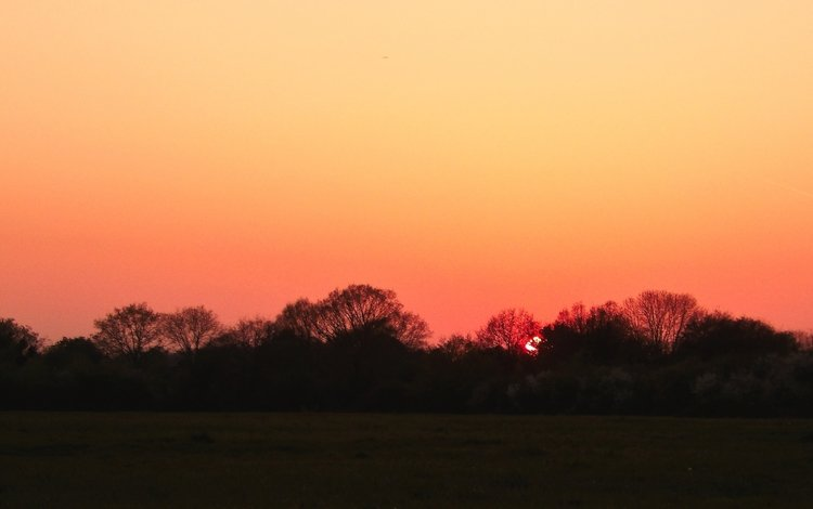 небо, деревья, закат, закат солнца, the sky, trees, sunset
