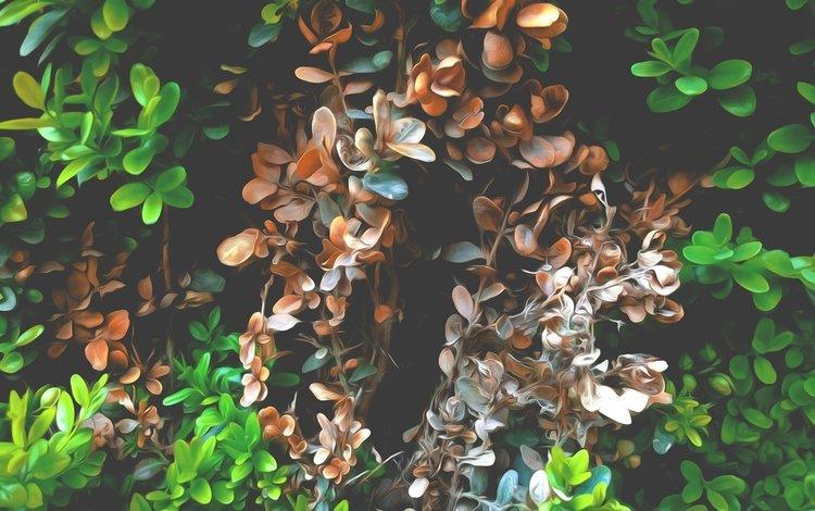 природа, растения, листья, nature, plants, leaves