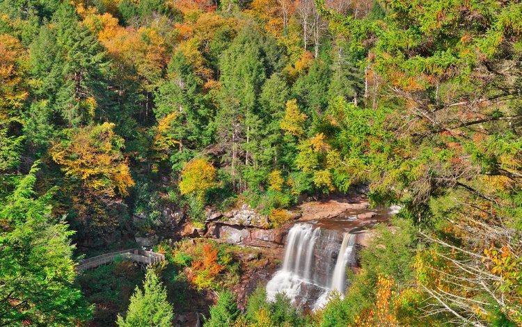 деревья, лес, водопад, осень, trees, forest, waterfall, autumn