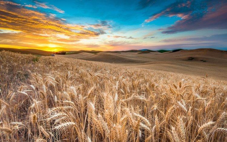 небо, облака, природа, закат, пейзаж, поле, колосья, пшеница, the sky, clouds, nature, sunset, landscape, field, ears, wheat
