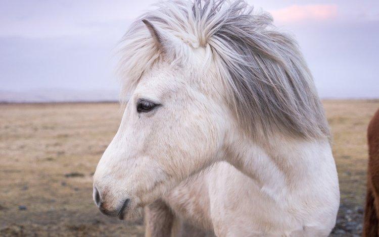 face, horse, mane