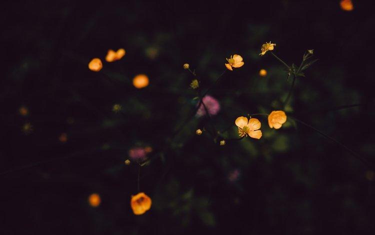 цветы, лепестки, стебли, полевые цветы, темно, flowers, petals, stems, wildflowers, dark