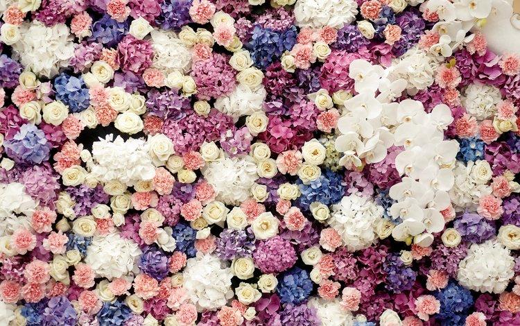 цветы, бутоны, розы, сладости, орхидеи, flowers, buds, roses, sweets, orchids