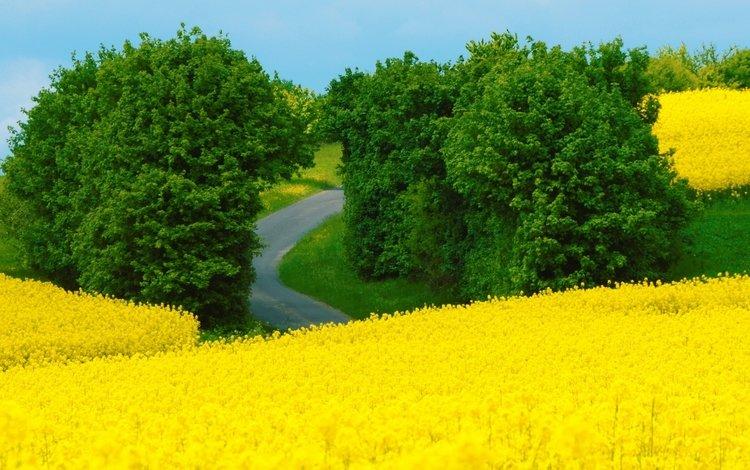 цветы, природа, пейзаж, поле, лето, луг, flowers, nature, landscape, field, summer, meadow