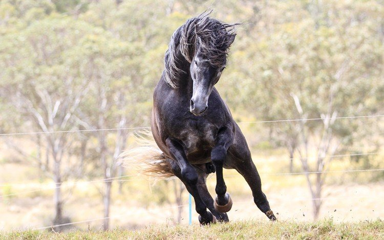 лошадь, конь, жеребец, мустанг, animals-horse-foal-mare-mammal-1920x1080-px-vertebrate-horse-like-mammal-stallion-mustang-horse-729766, horse, stallion, mustang
