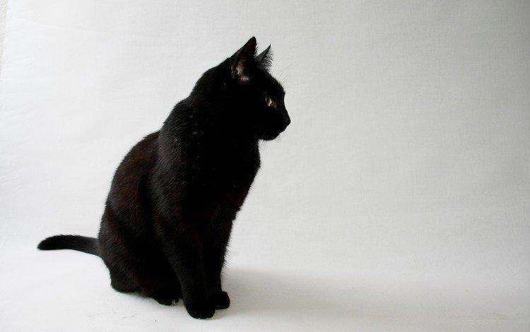 глаза, фон, кот, кошка, взгляд, черный, eyes, background, cat, look, black