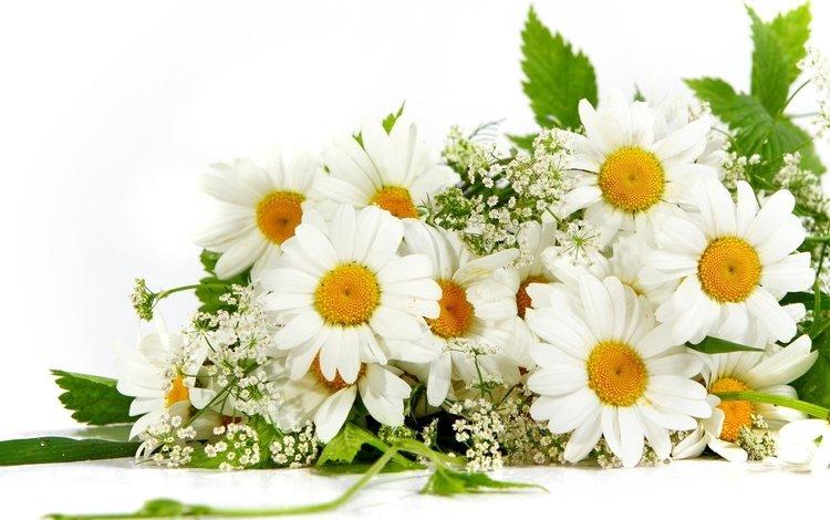 цветы, лето, лепестки, ромашки, букет, гипсофила, flowers, summer, petals, chamomile, bouquet, gypsophila